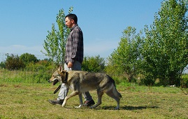 educateur canin comportementaliste montpellier gard herault Sports canins