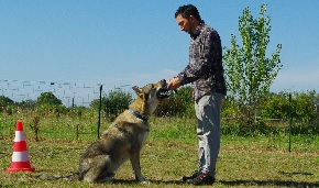educateur canin comportementaliste montpellier gard herault Education canine
